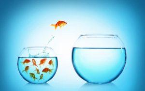 7 cái được của phát triển bản thân Người khôn ngoan biết tận dụng cơ hội, kẻ yếu thế lười biếng đánh mất tương lai